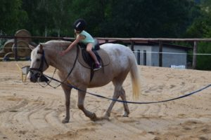 konie-3-2