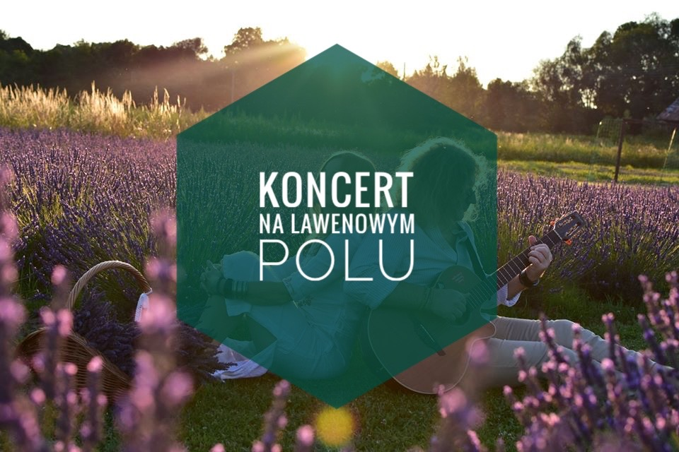 lawendowe-koncerty
